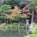 写真: 兼六園の紅葉