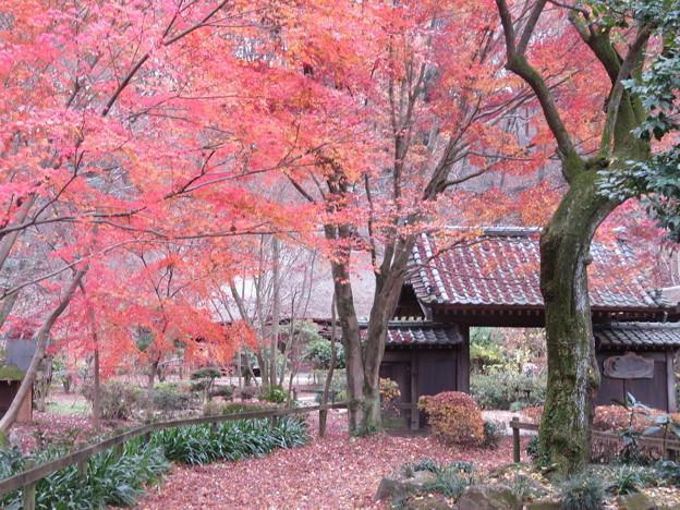 薬師池公園の紅葉