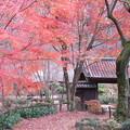 写真: 薬師池公園の紅葉