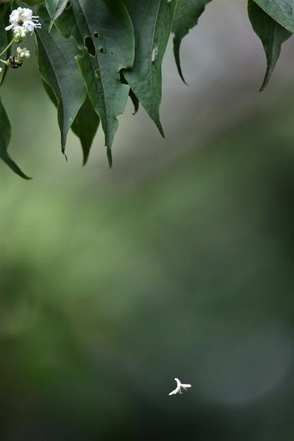 写真: 落花