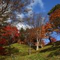 写真: 亀ケ城跡の紅葉