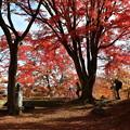 写真: 亀ケ城跡の紅葉2