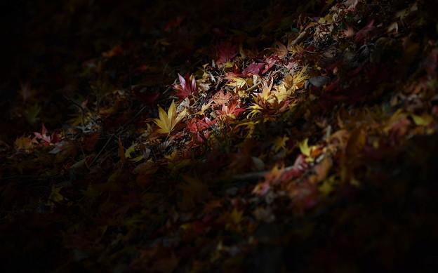 Photos: 落紅葉