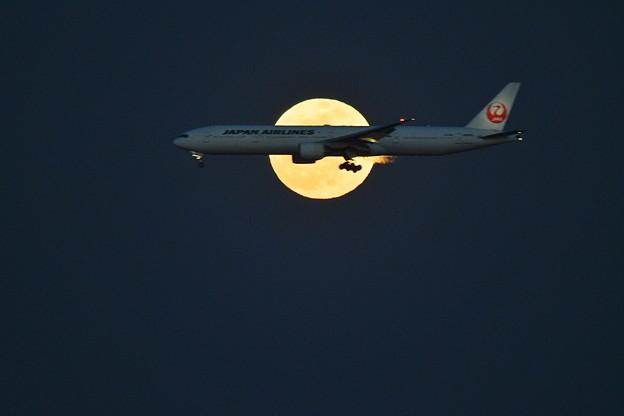 飛行機が大きくて。。。(^^ゞ