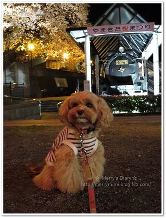山北鉄道公園の夜桜