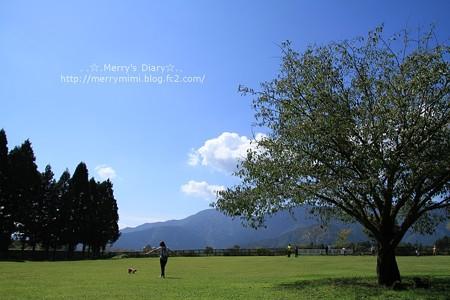 ASAGIRI Field Dogs Garden