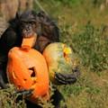 ハロウィンのチンパンジー