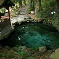 写真: 821 泉神社 泉が森
