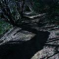 写真: 蛇塚 神峰山登山道