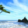 写真: グミ島 東滑川海浜緑地