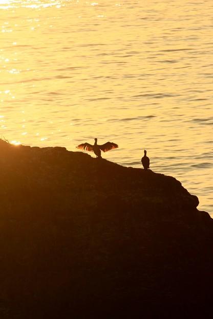 写真: 301 うのしま グミ島