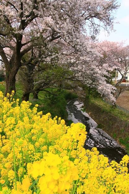 桜川緑地 日立市