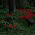 写真: 238 砂沢 北野神社