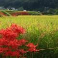 写真: 252 東連津川沿いの田園風景