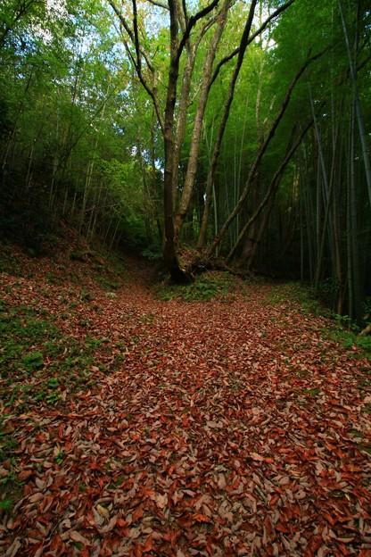Photos: 467  撫子山