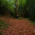 写真: 468  撫子山