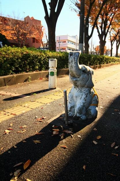 写真: 535 けやき通りの象さん