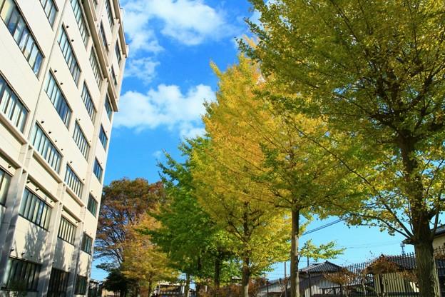 Photos: 721 茨城大学 日立キャンパス