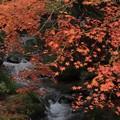 写真: 入四間川