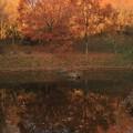 553 助川山 石の池
