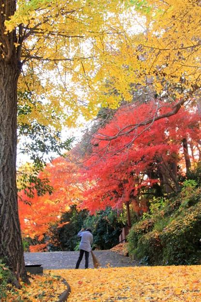 Photos: 36 専照寺の紅葉