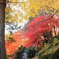 36 専照寺の紅葉
