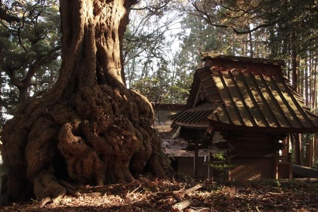 894 吉田神社 森山町