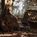 Photos: 84 吉田神社