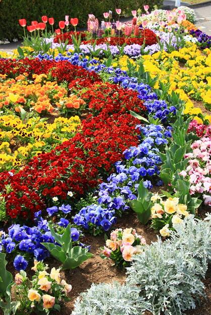 073 かみね公園 夢プロジェクト花壇