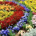 写真: 073 かみね公園 夢プロジェクト花壇