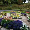 写真: かみね公園 夢プロジェクト花壇