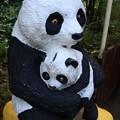 Photos: 067 かみね動物園のパンダ