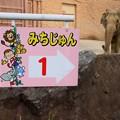 Photos: 067 『みちじゅん』の看板 かみね動物園