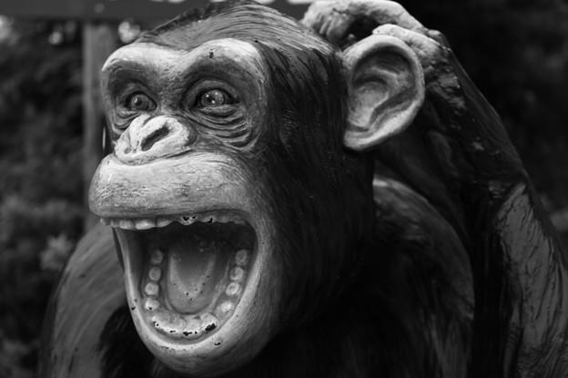 Photos: 065 かみね動物園
