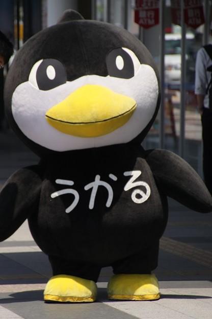 Photos: 227 うかるくん
