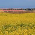 Photos: 941 久慈川の赤い橋