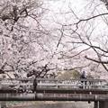 697 桜川