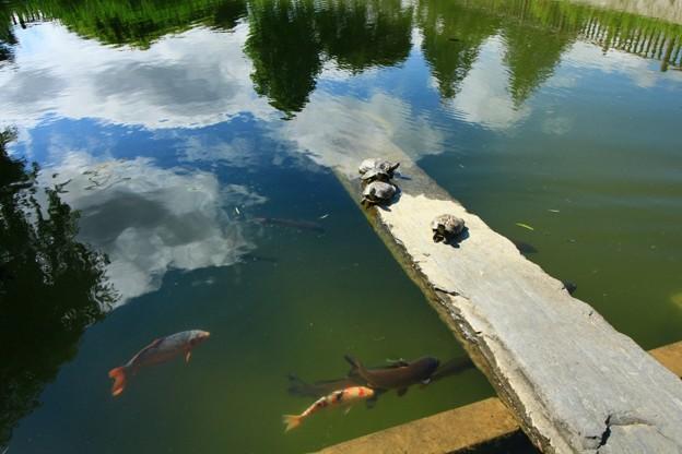 563 沼川弁天池