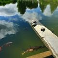 Photos: 677 沼川弁天池