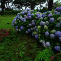 Photos: 266 南静公園