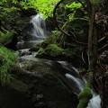 Photos: 365 陰作沢ダム下の滝
