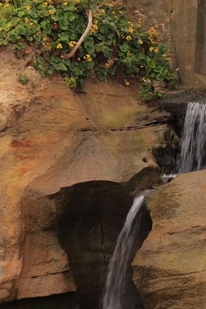 Photos: 268 ハマギクの滝
