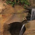 268 ハマギクの滝