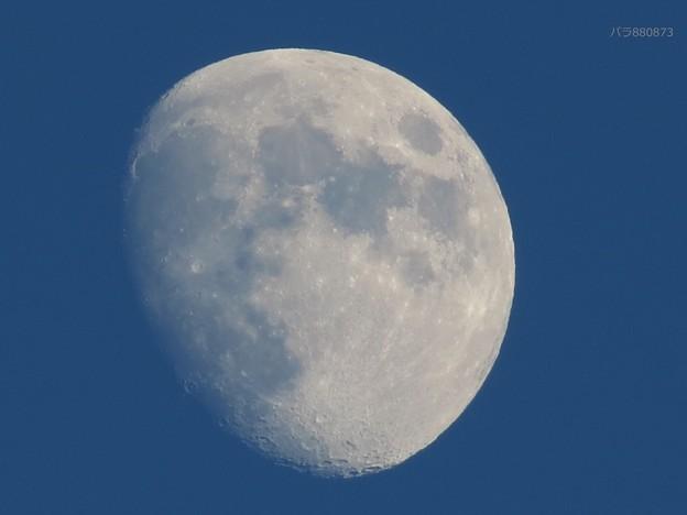 昨夕の月♪
