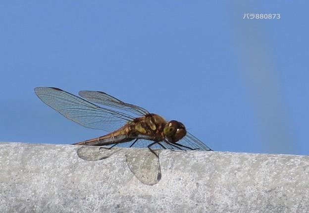 翅の影が美しく♪