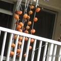 写真: 干し柿♪