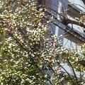 Photos: 午後の陽光