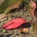 スカンポの草紅葉♪