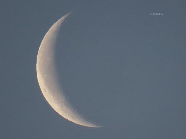 Photos: 朝のお月様♪