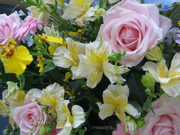 癒されるお花♪